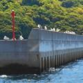 Photos: 新緑の風に吹かれてGW:のんびりカモメの水兵さん、こんにちは♪