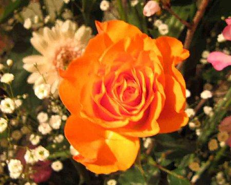 flower-210218-3