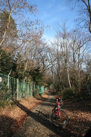 冬枯れの林道