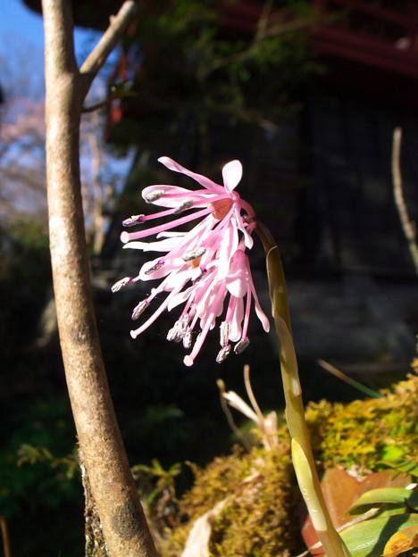 016:西行桜(おまけ)