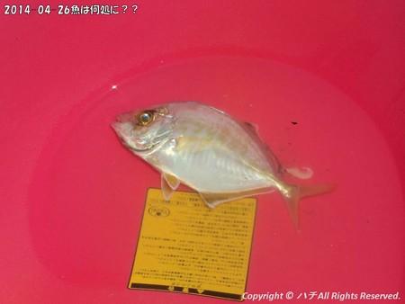 2014-04-26魚は何処に?? (8)