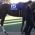 ナカヤマナイト(5回中山8日 10R 第58回グランプリ 有馬記念(G?)出走馬)