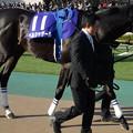 Photos: ベルシャザール(1回東京8日 11R 第31回 フェブラリーステークス(GI)出走馬)
