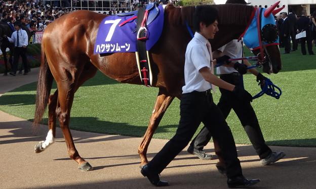 ハクサンムーン(4回中山9日 11R 第47回 スプリンターズステークス(GI)出走馬)