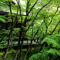 Photos: 新緑の回廊