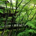 新緑の回廊