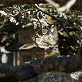 Photos: 梅と灯籠