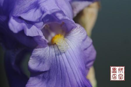 河畔の花04