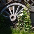 Photos: ガーデンの片隅