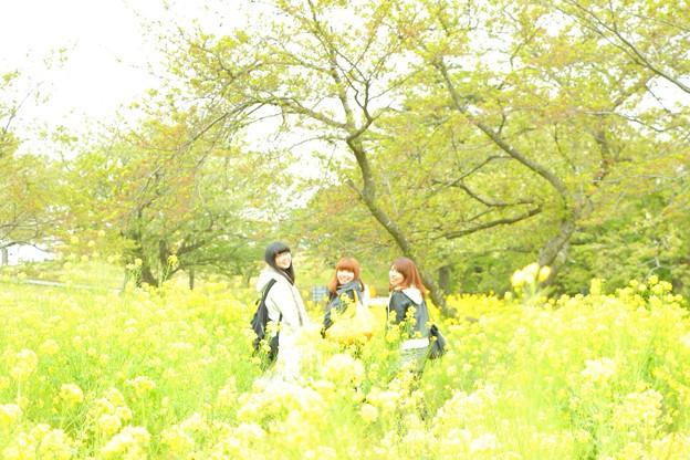黄色の世界
