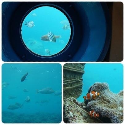 20120603 ブセナ海中公園(海中展望塔、お魚さん)
