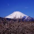 大雪の翌日 曽我梅林の梅と気温あがった山頂は白く湯気・・