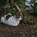 Photos: 叶崎灯台の猫・1