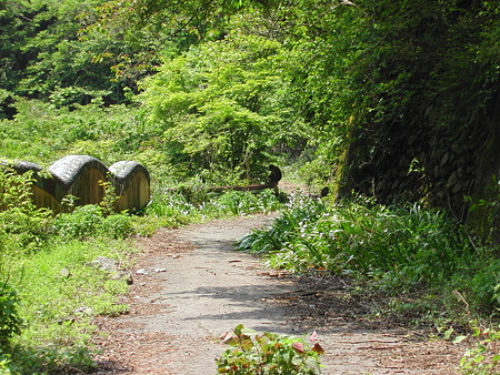 R306佐目トンネル旧道? 猿発見