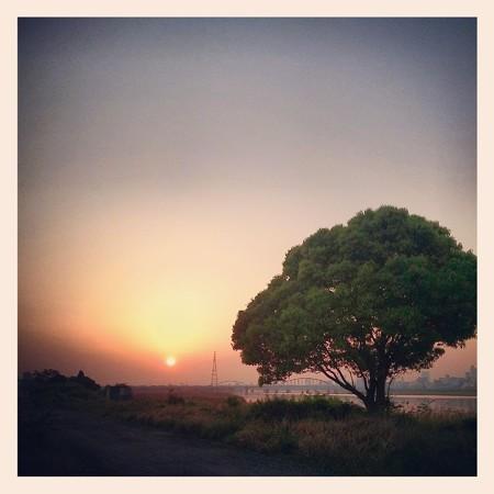 大きな木とお日様