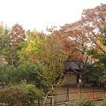 Photos: 隅田川堤防より神社見っけ DSC00599