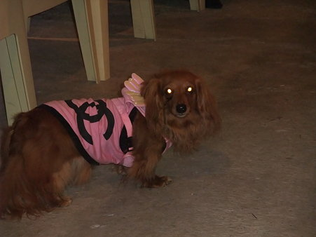捨て猫、捨て犬はViViが目を光らせてますぞ。
