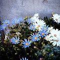 Photos: 20090418_041