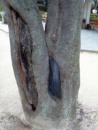 タイヤ、木に食われる。