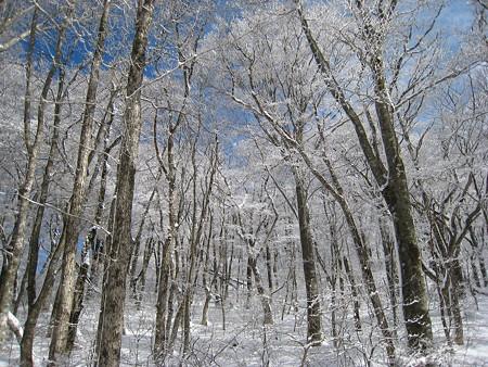 氷に覆われた木々