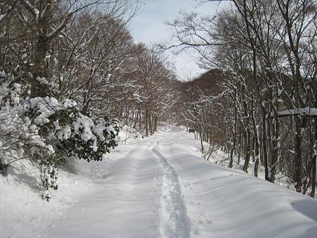 スキー跡を歩く