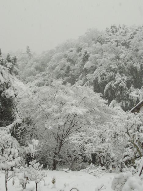 雪景色の木々