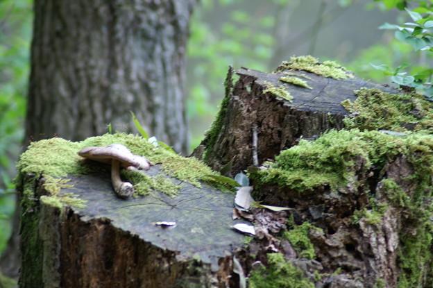 森の中の忘れ物