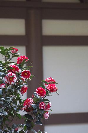 円覚寺 09