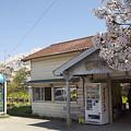 写真: 小湊鉄道の桜 09
