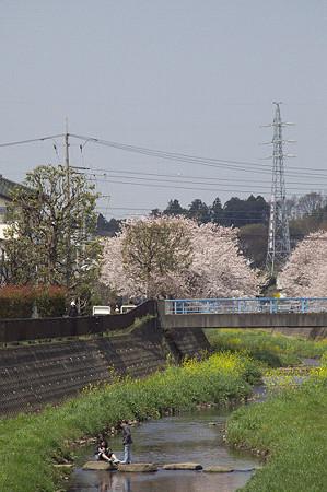 東戸塚の桜 08