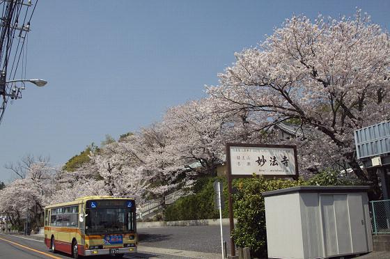 写真: 東戸塚の桜 20
