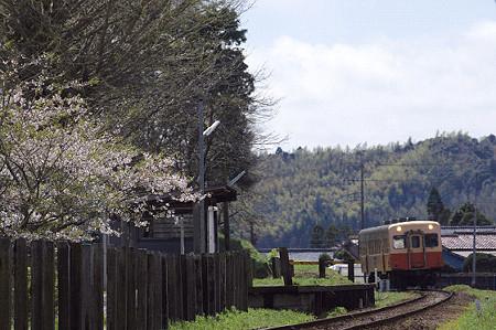 小湊鉄道 10 桜そよぐ鉄路