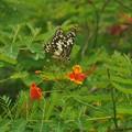 アゲハ蝶と可愛いお花