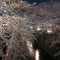 写真: 目黒川・夜桜3