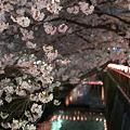 写真: 目黒川・夜桜4